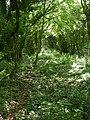 Verwood, railway trackbed - geograph.org.uk - 1319644.jpg