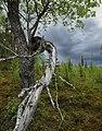 Vide i naturreservat Brännberget.jpg