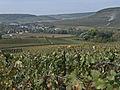 Vigne (village de Festigny51) Cl J Weber (23050629773).jpg