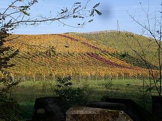 Begnins - Vineyards outside Begnins