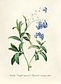 Vintage Flower illustration by Pierre-Joseph Redouté, digitally enhanced by rawpixel 70.jpg