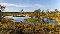 Viru Bog, Parque Nacional Lahemaa, Estonia, 2012-08-12, DD 11.JPG