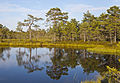 Viru Bog, Parque Nacional Lahemaa, Estonia, 2012-08-12, DD 20.JPG
