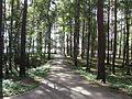 Visaginas, Lithuania - panoramio (6).jpg