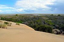 Vista de las marismas del Parque Doñana.jpg