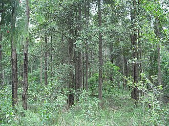 North Ryde, New South Wales - Wallumatta Nature Reserve