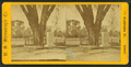 Washington elm, Cambridge, Mass, by U.S. Stereoscopic Co..png