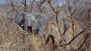 Waza National Park - Elephant in Waza National Park