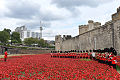 Welsh Guards Band in a sea of poppies.jpg