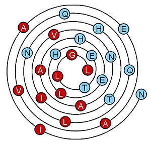 Alpha helix - Wenxiang diagram