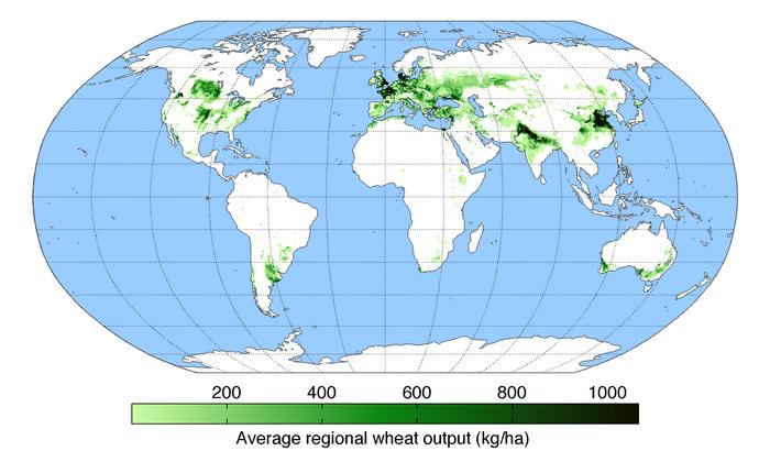 Una mappa della produzione di frumento in tutto il mondo.