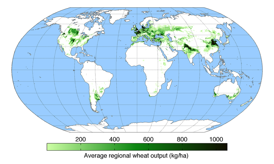 A map of worldwide wheat production. WheatYield.png
