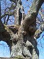 Wiesbaum-baum.jpg