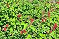 Wikipedia 13. Fotoworkshop Botanischer Garten Erlangen 2013 by-RaBoe 006.jpg
