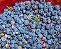 Wild Blueberries (19643306265).jpg