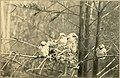 Wild life of orchard and field; (1902) (14597587127).jpg