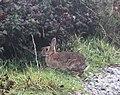 Wildlife at Land's End (21837045210).jpg