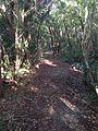 Windley Key trail.JPG