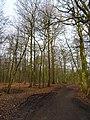 Wolbecker Tiergarten (3).JPG
