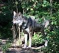 Wolf Tierpark Hellabrunn-9.jpg