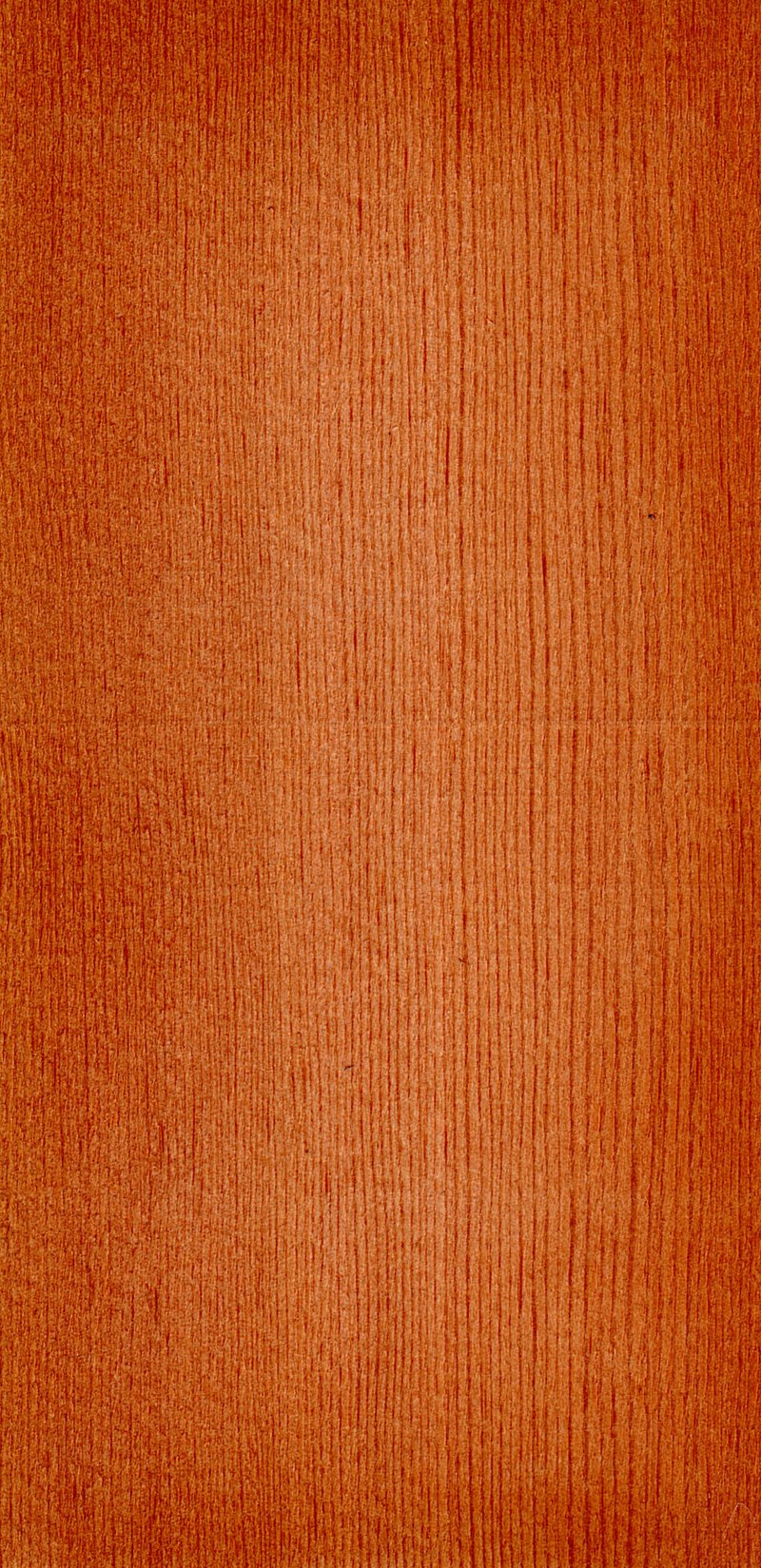 Wood Pseudotsuga taxifolia.jpg