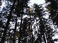 World full of trees.jpg