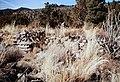 Yapashi Ruins.jpg