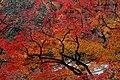 Yoshimine-dera (8255238327).jpg