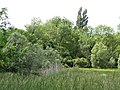ZNIEFF ouest chez Dumaine (Bouteilles) (4).jpg