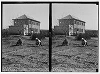 Zionist colonies on Sharon. Borochov. Girls' farm, potting plants. LOC matpc.02673.jpg