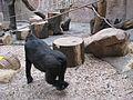 Zoo praha mg 042.jpg