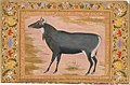"""Study of a Nilgai (Blue Bull)"", Folio from the Shah Jahan Album MET DT4808.jpg"