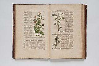 (Ilustrações botânicas)