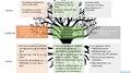 Árbol de problemas completo.pdf