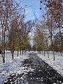 Аллея в мемориальном парке города Бронницы.jpg