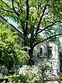 Будинок вчених дуб у Харкові.jpg