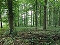 Веселівський заказник (листяний ліс).jpg