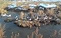 Домашние гуси-сухоносы на канале Салар.JPG