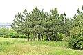 Ділянка «Пчьолкінські закам'янілі дерева».jpg