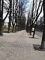 Липова алея в Сумах на Петропавлівській.jpg