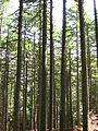 Национален парк Пелистер 2014 (19).JPG