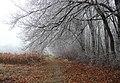 На узліссі - panoramio.jpg