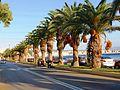 Пальмы на набережной - panoramio.jpg