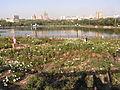 Парк Щербакова 088.jpg