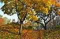 Парк пам'ятка садово-паркового мистецтва Парк Кіото 01.jpg