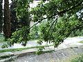 Парк шума Гази Баба во мај (119).JPG