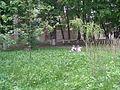 Сквер з береками на Руській, 3.JPG