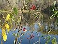 Тарелочкин пруд 46.jpg
