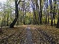 Украина, Киев - Голосеевский лес 70.jpg