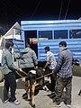 जम्मू नगर निगम एक बछड़े को बचाते हुए.jpg